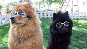 狗,毛小孩,護目鏡,Doggles Eyewear臉書