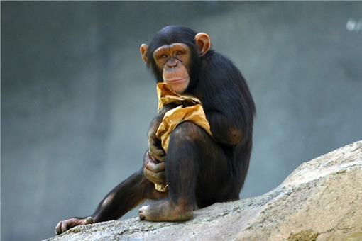 JK羅琳,哈利波特,BBC妙聞,黑猩猩,獼猴,公廁,莎士比亞