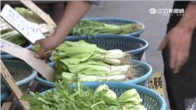 菜價,市場,陳志清,農委會,黃偉哲,陳志清,寒流,包心白菜,茄子,高麗菜