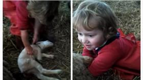 英國3歲小女孩替小羊接生/youtube