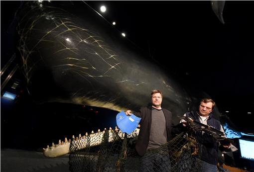 鯨魚,擱淺(圖/美聯社/達志影像)