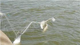 補魚、流刺網/百度