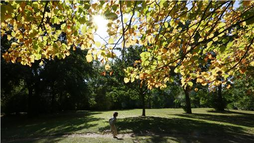 太陽、陽光、晴天、好天氣(圖/路透社/達志影像)