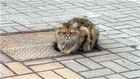 毛小孩,貓,喵星人,翻攝自 英國《每日郵報》