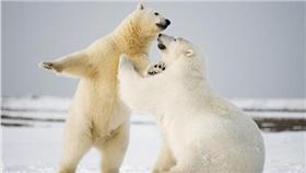 北極熊https://www.flickr.com/photos/puliarfanita/22154670472/in/photolist-zKJtF7-8u2ELb-nS9R1W-2rHKUy-jM6dLm-4EG3Jd-mqucZe-bYEMSJ-7sw4CG-4fsyGe-qPjLzs-6K338s-A2DnWf-84xgMj-mpqEnF-bsozXc-9G9Vme-8vqpyd-4on5RG-aaCmw3-9uKpHD-ffxd5s-zEN8F3-6sz8cU-bwnL44-bVGczy-4oks3k-kDYXbk-4o4xo5-34rbHK-9fSCFv-9j7FLE-ozQuXm-qRkykh-vjfAeY-9jNaoo-96qbFM-nzDfSp-zRUGdy-dnrLC3-7EiWrp-wbVfKm-zLPNYx-ovEkAX-wfnU9f-hKvHmh-7EnMt1-vc9nTQ-w9zBQ4-wbUfxj