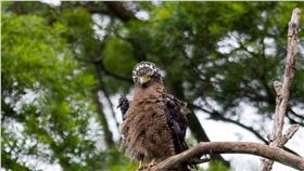 ▲春季觀音山賞鷹 體驗手繪猛禽生態趣味(圖/觀光局北觀處)