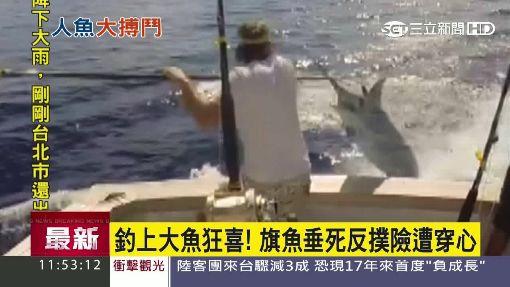 釣上大魚狂喜! 旗魚垂死反撲險遭穿心