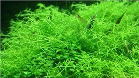 日韓最夯植物保養成分一次蒐羅!搞懂就能選擇適合自己的保養品