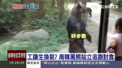 工讀生換裝?黑熊站立追跑 遊客驚豔
