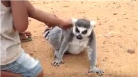 狐猴_https://www.youtube.com/watch?v=OMvmgPw5nXU