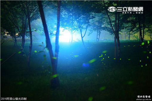 ▲賞螢火蟲請別這樣做 「然後,我就死了」(圖/漫步在雲端的阿里山提供)