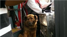 司機讓狗狗上公車。(圖/翻攝自網友臉書)