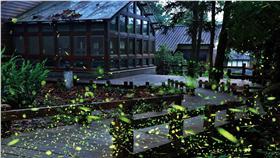 螢火蟲,大安森林公園/台北旅遊網fb