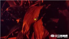 螢火蟲 大安森林之友會提供