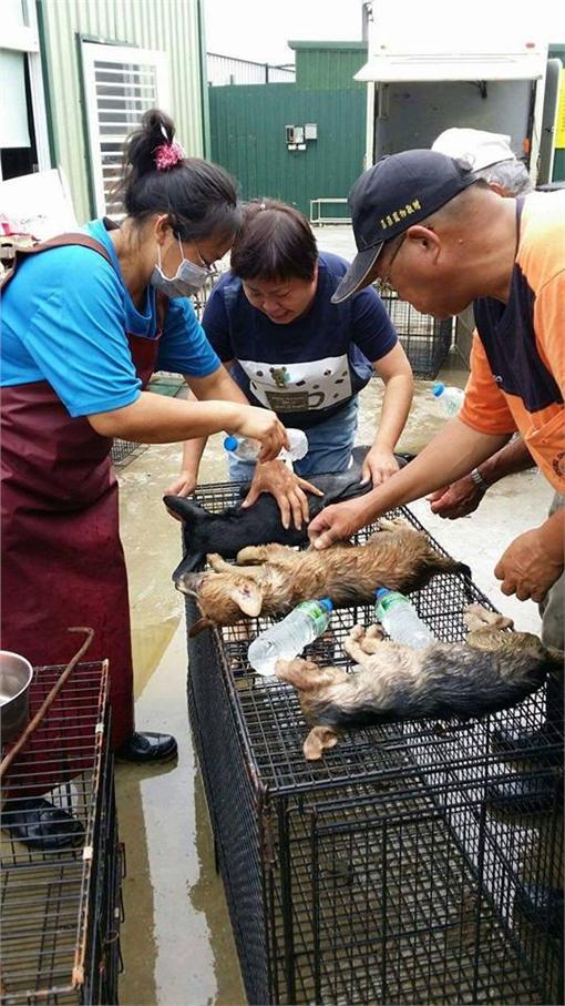 嘉義縣家畜所的流浪狗在車上被悶死/翻攝自花蓮等家的毛孩子臉書