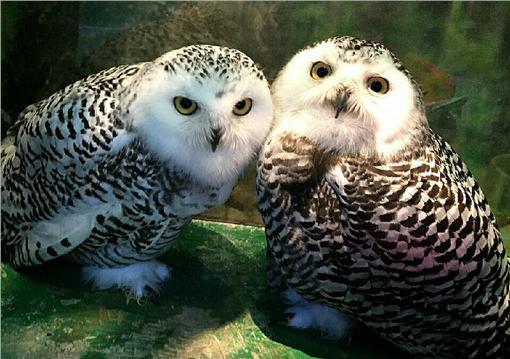 貓頭鷹餐廳,http://owls-f.sakura.ne.jp/