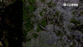 珊)花蓮五級震2400
