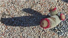 生殖器,陰莖,小弟弟▲示意圖/攝影者Michael Coghlan, flickr CC License-https://www.flickr.com/photos/mikecogh/8198548509/