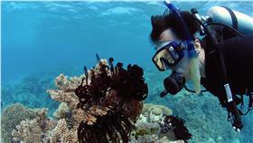 大堡礁,澳洲,Great Barrier Reef,珊瑚-圖/美聯社(16:9)