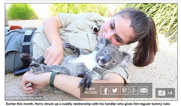 ▲無尾熊遇上正妹飼養員。(圖/翻攝自《每日郵報》網站)http://www.dailymail.co.uk/news/article-3560569/Harry-koala-shares-tender-Eskimo-kiss-zoo-keeper-Tami-Wilson.html