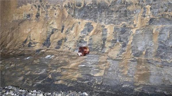 「中國第一長洞」雙河洞「飛貓」(圖/翻攝自央視新聞微博)