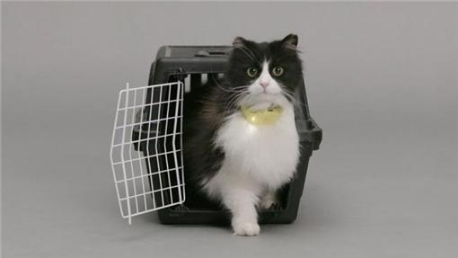 翻議項圈,貓,http://www.temptationslab.com/
