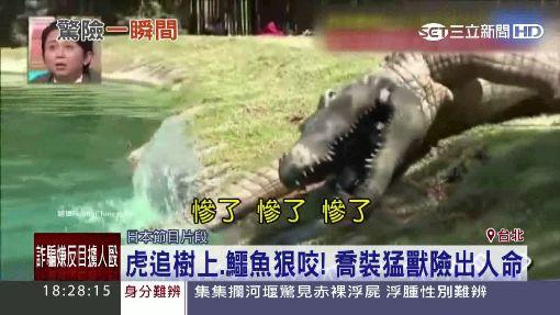 虎追樹上.鱷魚狠咬! 喬裝猛獸險出人命