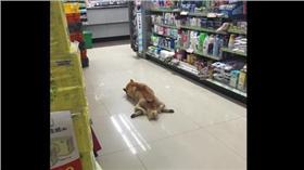 柴犬,便利商店(圖/翻攝自爆廢公社)