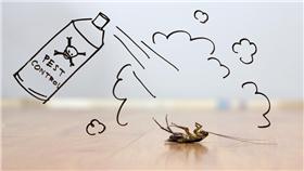 蟑螂,小強,除蟑,害蟲,殺蟲劑,蟑螂藥 圖/達志影像