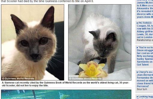 寵物,貓咪,年齡,長壽,暹羅貓,金氏世界紀錄dailymail