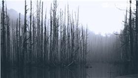 阿里山水漾森林、南投、嘉義、爬山(圖/記者林敬旻攝)