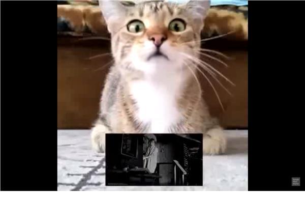 貓看恐怖片(圖/翻攝自YouTube)