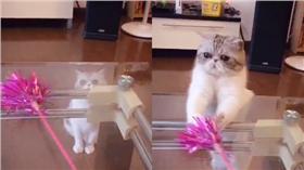 貓/翻攝自美拍Younger妈妈