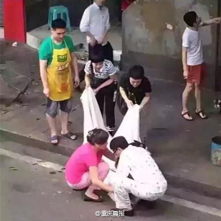 哈士奇(圖/截自《重慶晨報》
