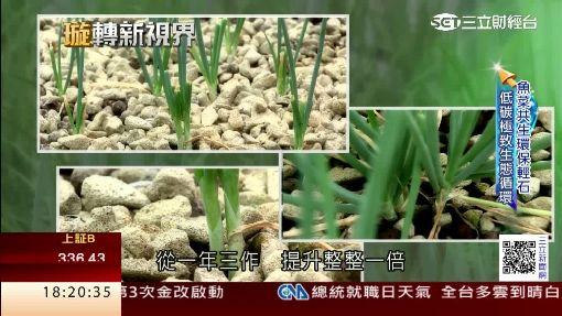 魚菜共生低碳農業 輕石可種出青蔥!