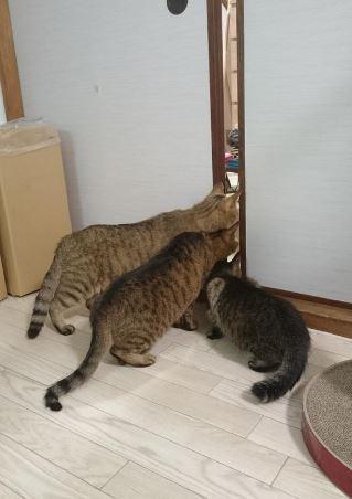 貓,喵星人,吸塵器,疊疊樂,偷看,毛小孩nkyanqoozoon 推特