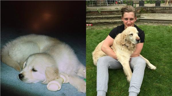 狗,https://twitter.com/JackRichards_7/media,https://www.buzzfeed.com/juliegerstein/this-guys-heartwarming-story-about-his-puppy-with-cancer-wil?utm_term=.vj80MonxKL#.fl2R3qByQ2