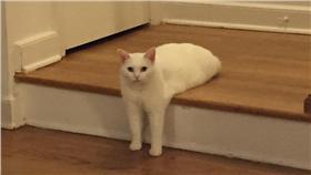 貓,http://www.boredpanda.com/funny-half-cat-photoshop-battle/