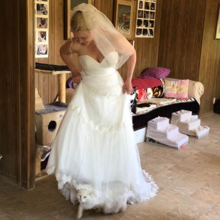 貓,婚禮,https://twitter.com/ck_foto/status/732707385920249856