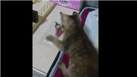 貓打指甲剪(圖/翻攝自YouTube)