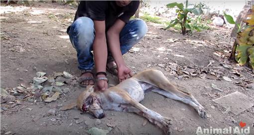狗狗、毛小孩、攻擊(圖/翻攝自(Animal Aid Unlimited, India YouTube)