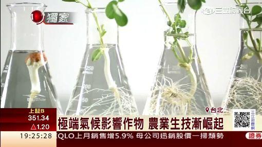 極端氣候影響作物 農業生技漸崛起