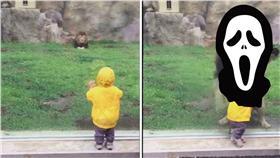 日本獅子撲男童 (圖/翻攝自YouTube)