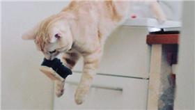 意外受貓咪喜歡的日用品(圖/Twitter)