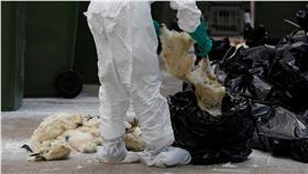 H7N9流感_路透