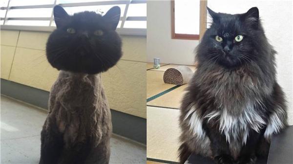 貓,https://twitter.com/kohaku_komugi