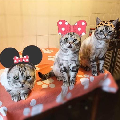 貓,https://www.instagram.com/lanlan731/