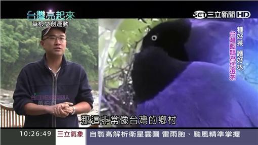 台灣藍鵲茶