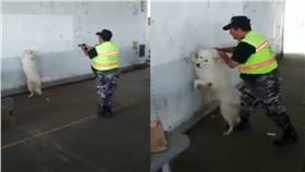 狗,嫌犯,演戲/FB:爆料公社