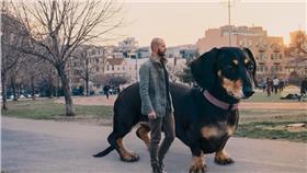 臘腸犬、寵物、句型犬(圖/翻攝自mitchboyer)